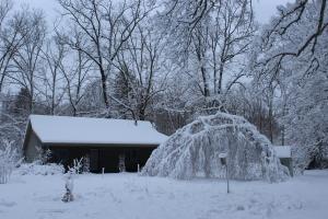 Pararamic studio curved tree USE