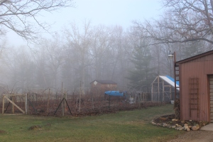 Barn coop garden in fog