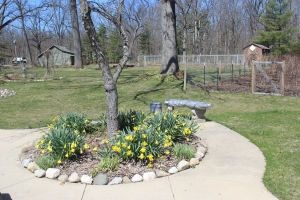 April daffodils to circle USE