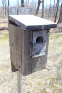Bluebird house very close USE