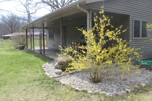 Forsythia and studio USE