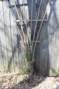 Silver Lace Vine , trelllis, fence