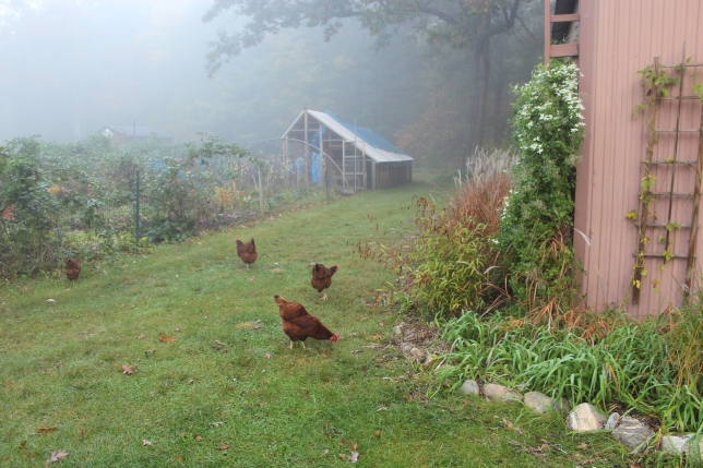 coop-side-of-pole-banr-an-chickens