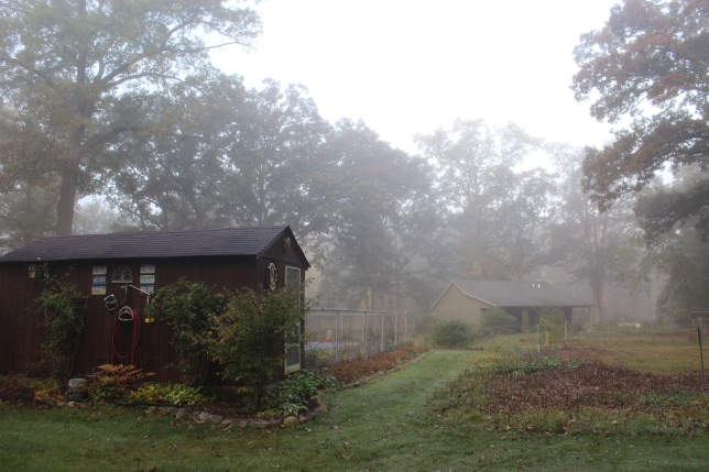 pool-house-and-studio-in-fog